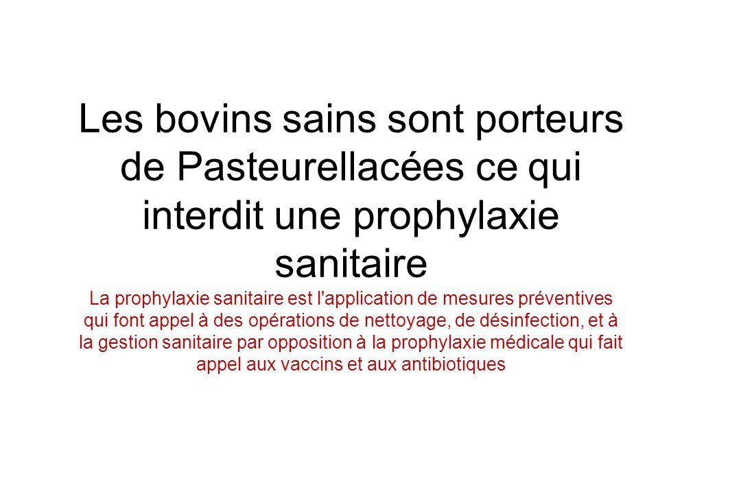 Les bovins sains sont porteurs de Pasteurellacées ce qui interdit une prophylaxie sanitaire La prophylaxie sanitaire est l application de mesures préventives qui font appel à des opérations de nettoyage, de désinfection, et à la gestion sanitaire par opposition à la prophylaxie médicale qui fait appel aux vaccins et aux antibiotiques