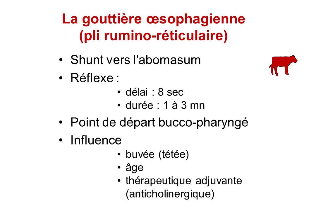 La gouttière œsophagienne (pli rumino-réticulaire)