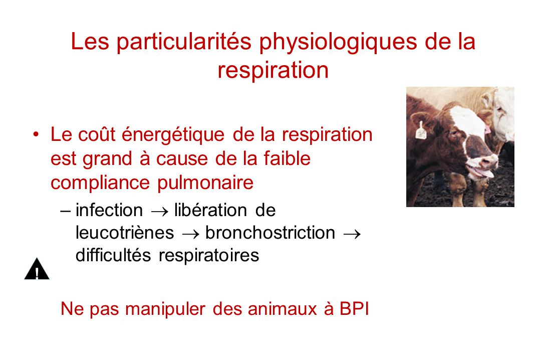 Les particularités physiologiques de la respiration