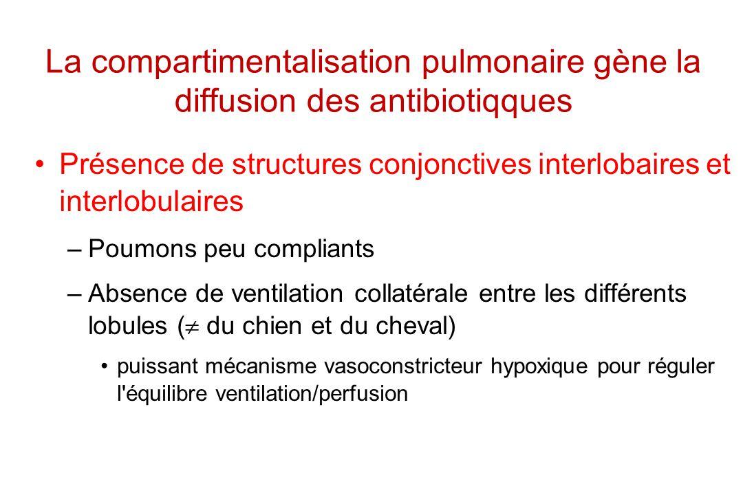 La compartimentalisation pulmonaire gène la diffusion des antibiotiqques