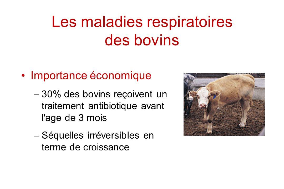 Les maladies respiratoires des bovins