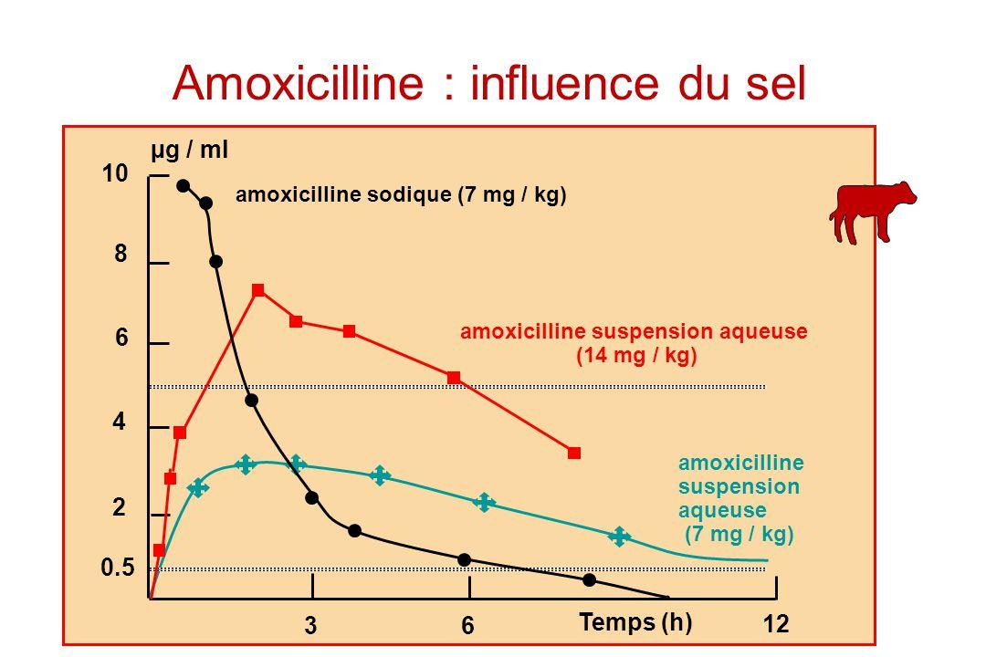 Amoxicilline : influence du sel