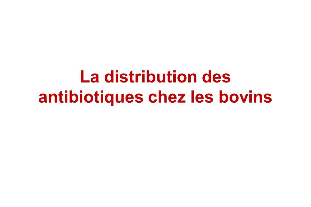 La distribution des antibiotiques chez les bovins