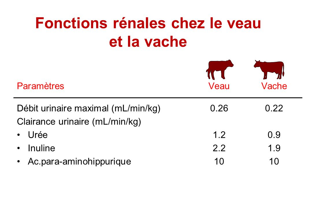 Fonctions rénales chez le veau et la vache
