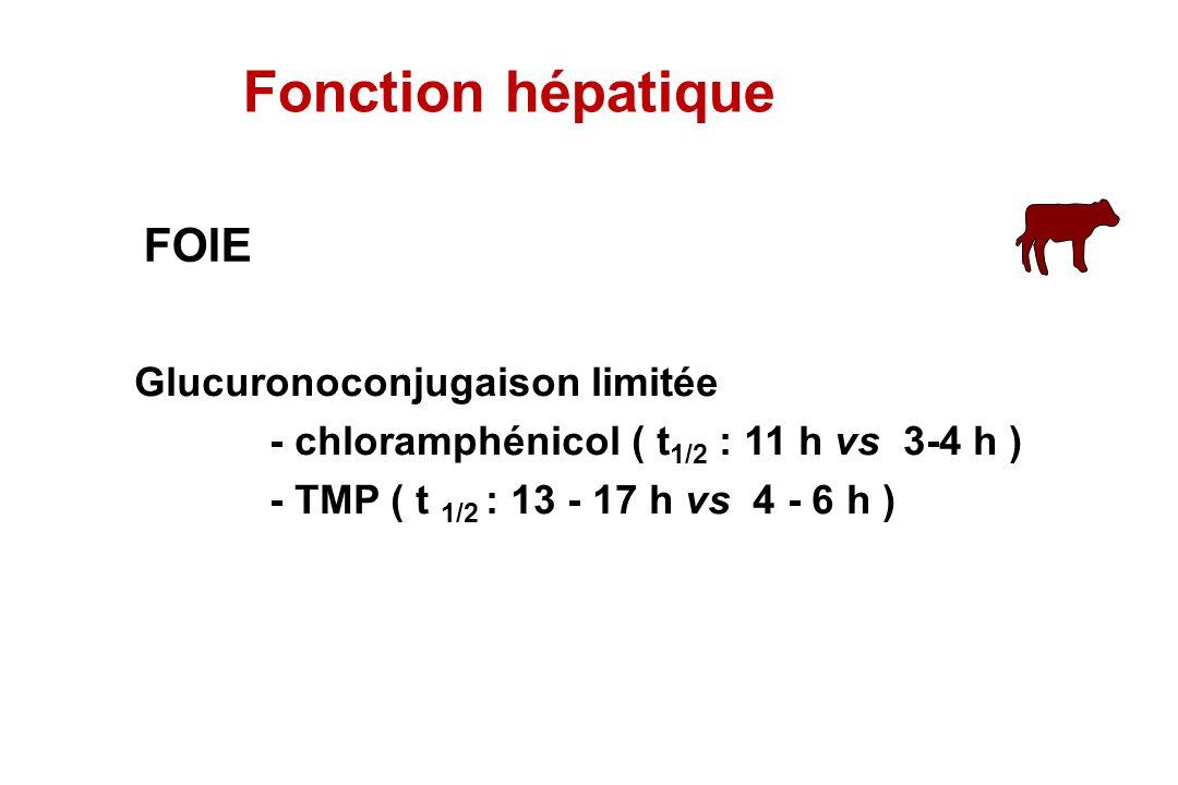 Fonction hépatique FOIE Glucuronoconjugaison limitée