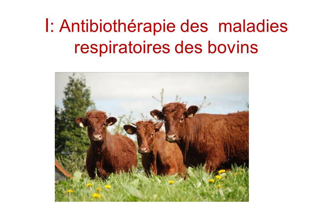 I: Antibiothérapie des maladies respiratoires des bovins