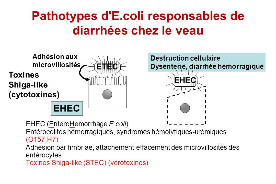 Pathotypes d E.coli responsables de diarrhées chez le veau