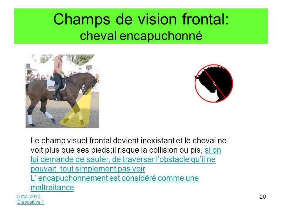 Champs de vision frontal: cheval encapuchonné