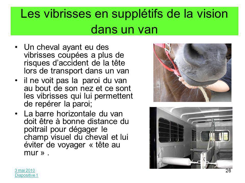 Les vibrisses en supplétifs de la vision dans un van