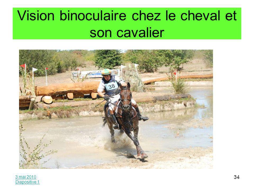 Vision binoculaire chez le cheval et son cavalier