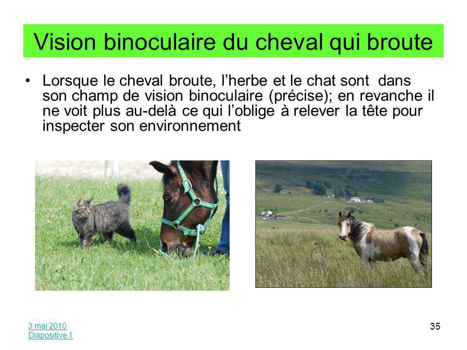Vision binoculaire du cheval qui broute