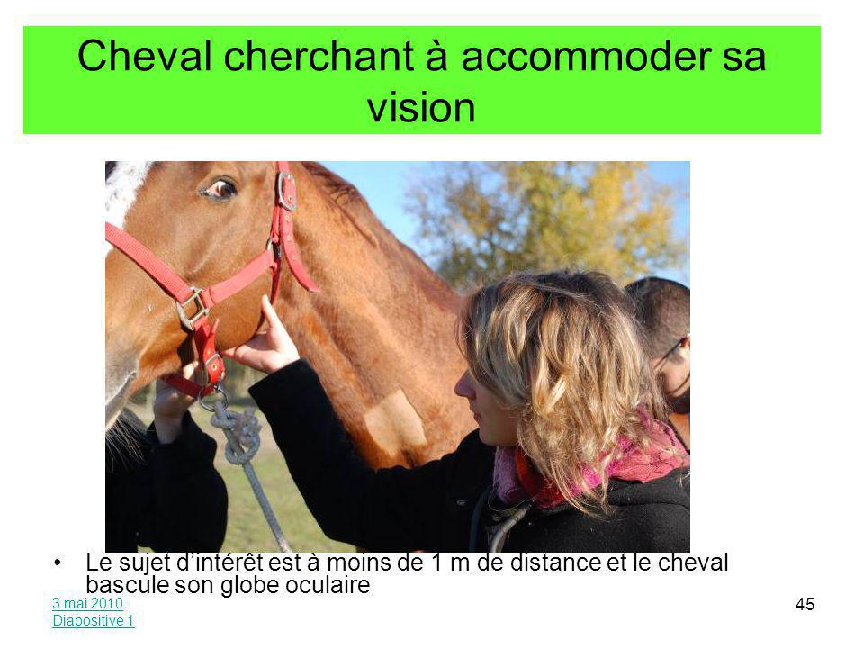Cheval cherchant à accommoder sa vision