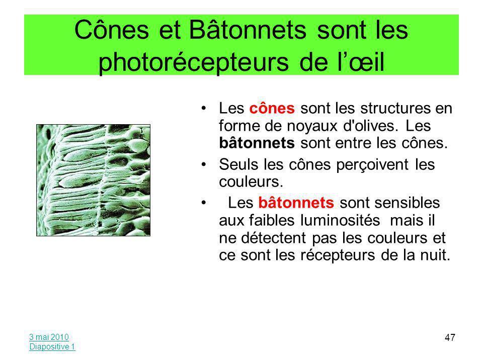 Cônes et Bâtonnets sont les photorécepteurs de l'œil