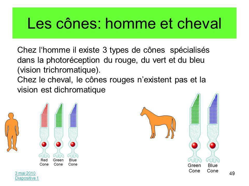 Les cônes: homme et cheval