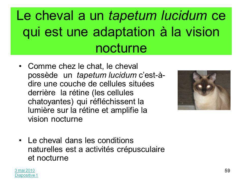 Le cheval a un tapetum lucidum ce qui est une adaptation à la vision nocturne