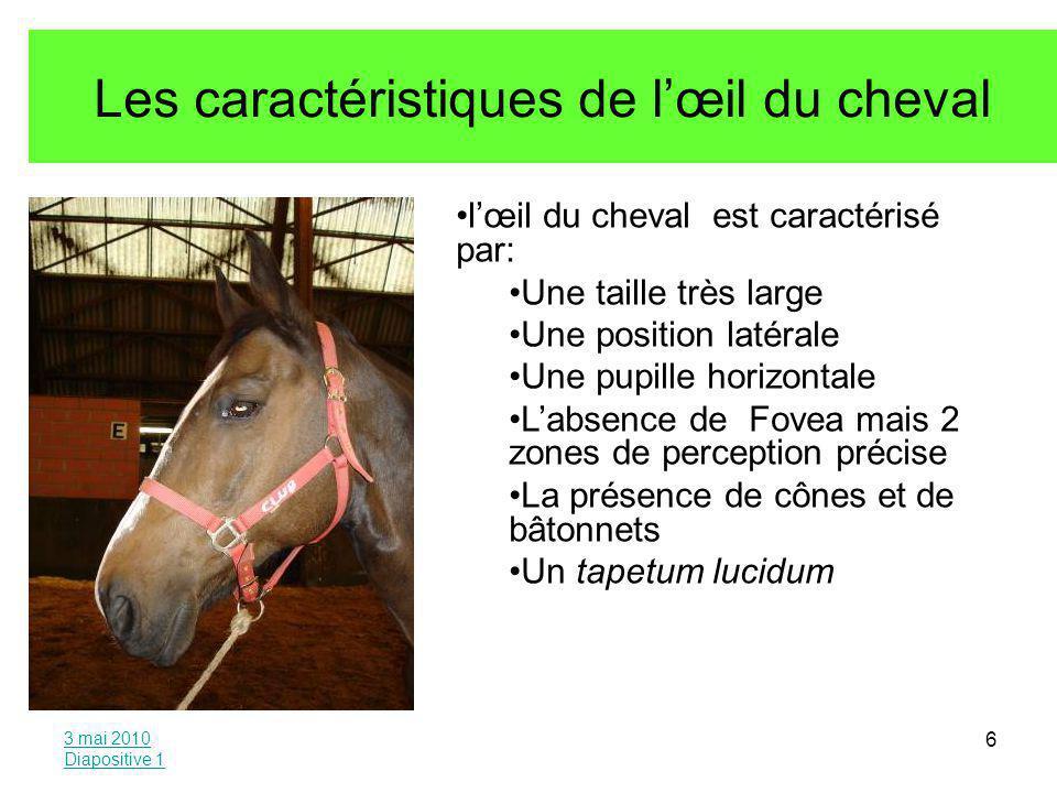 Les caractéristiques de l'œil du cheval