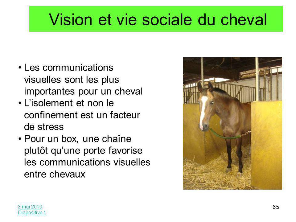 Vision et vie sociale du cheval