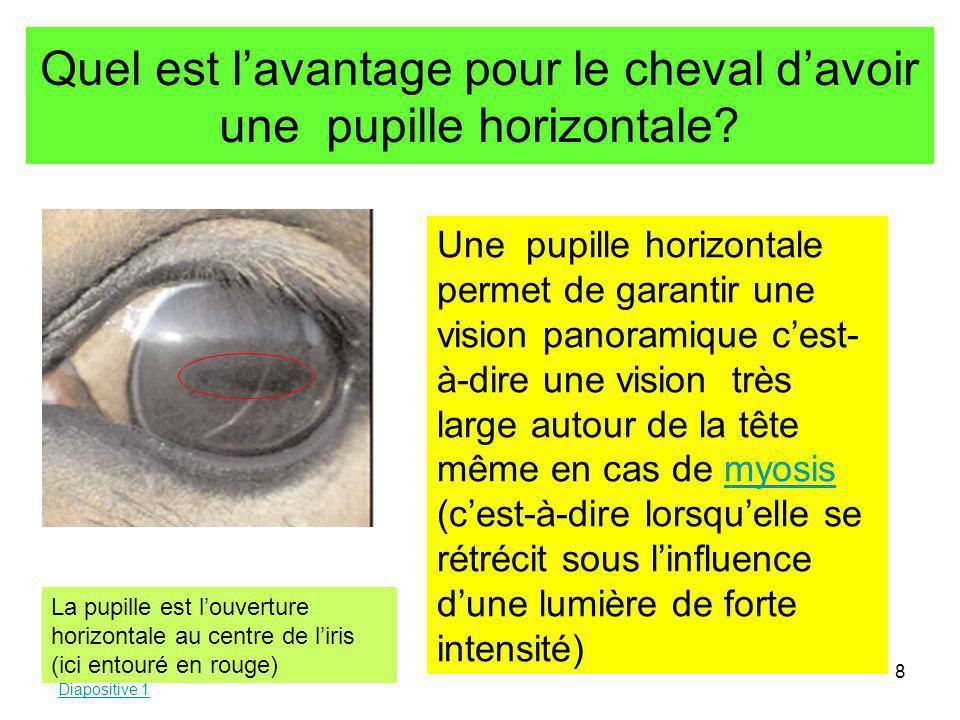 Quel est l'avantage pour le cheval d'avoir une pupille horizontale