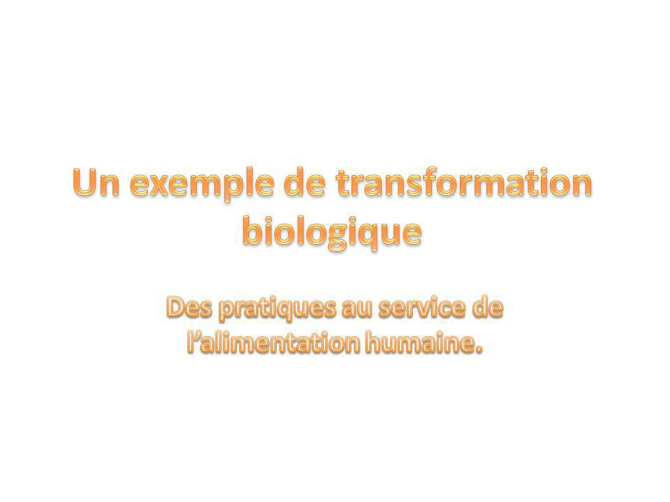 Un exemple de transformation biologique