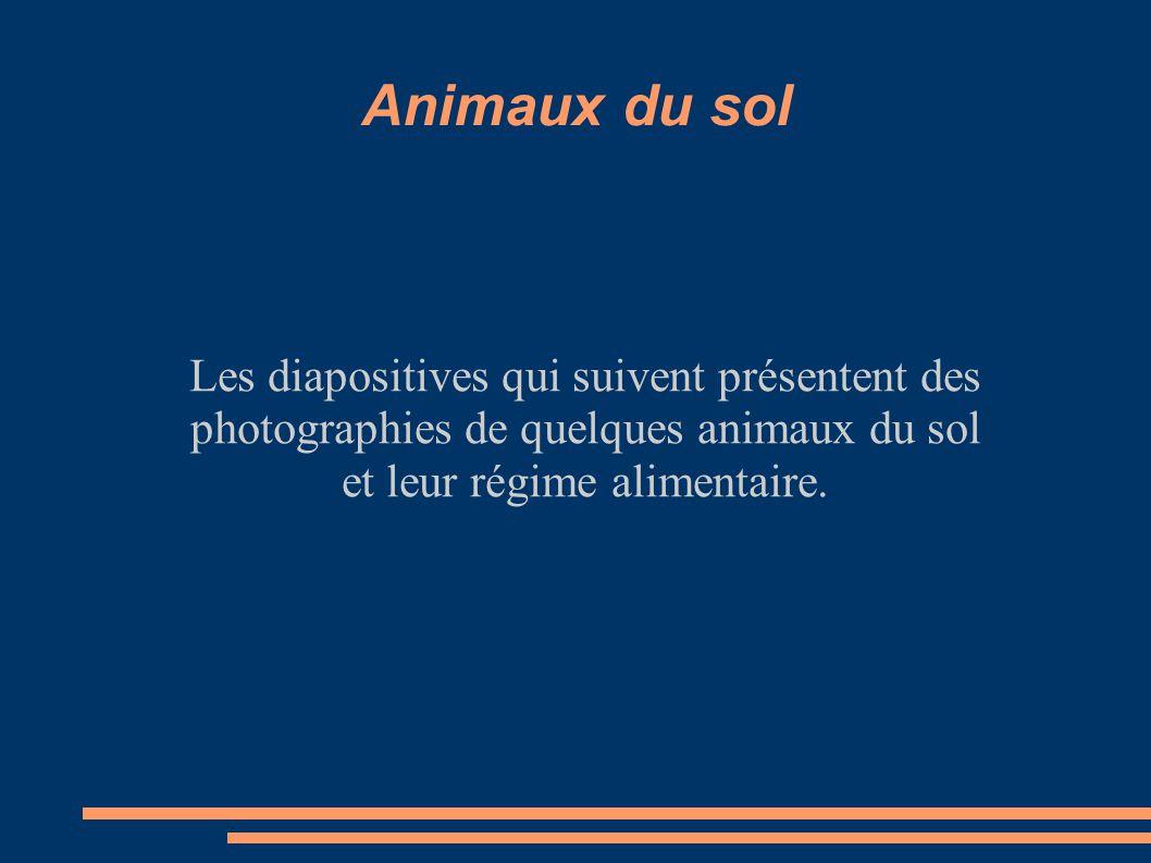 Animaux du sol Les diapositives qui suivent présentent des photographies de quelques animaux du sol et leur régime alimentaire.