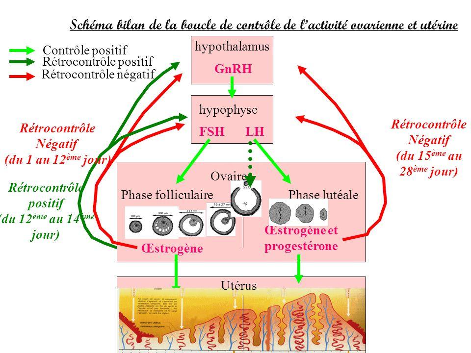 Schéma bilan de la boucle de contrôle de l'activité ovarienne et utérine