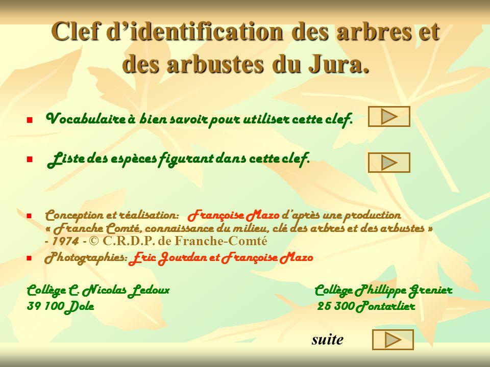 Clef d'identification des arbres et des arbustes du Jura.