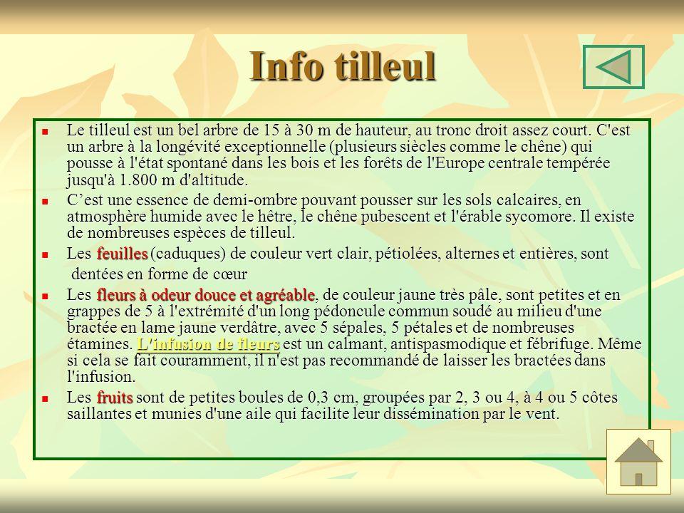 Info tilleul