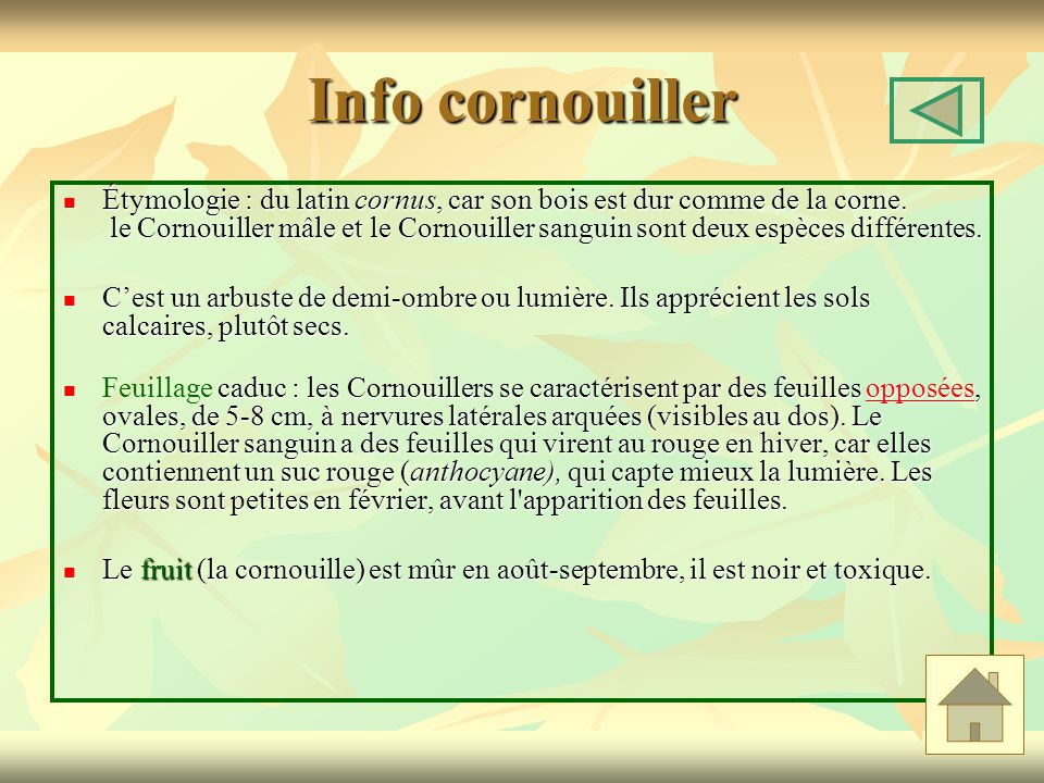 Info cornouiller