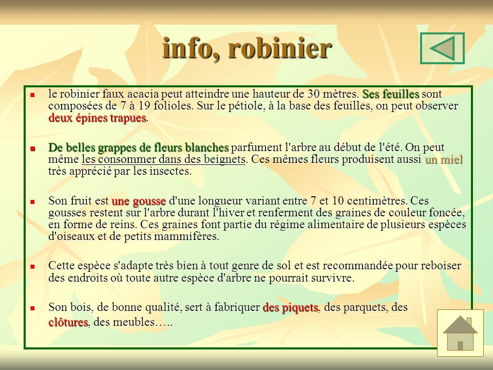 info, robinier