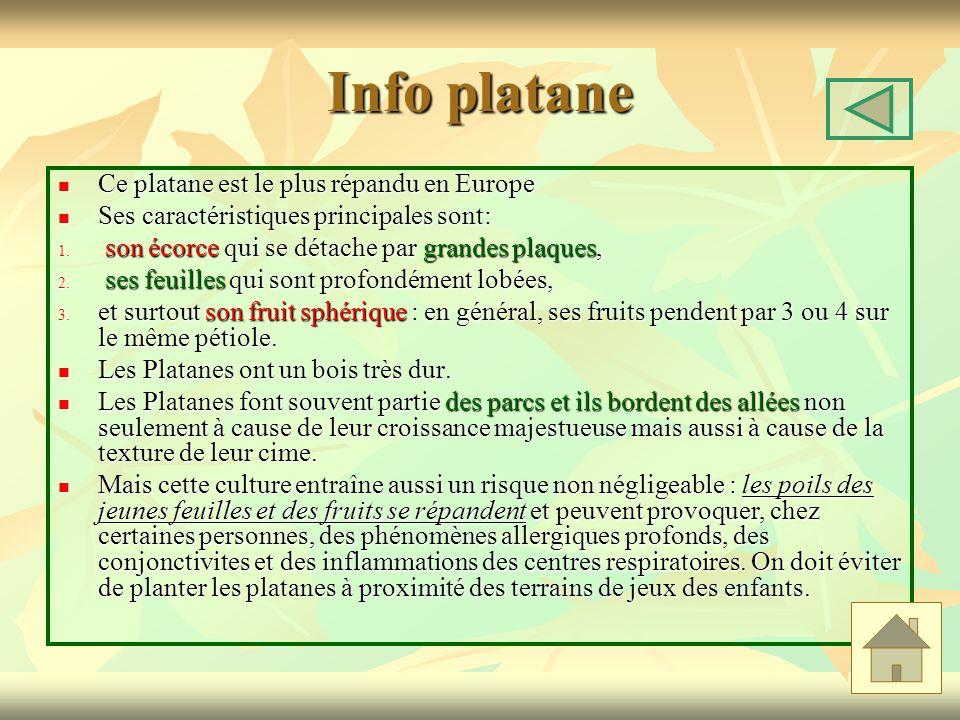Info platane Ce platane est le plus répandu en Europe