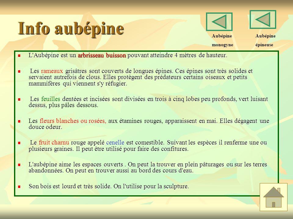 Info aubépine Aubépine. monogyne. Aubépine. épineuse. L Aubépine est un arbrisseau buisson pouvant atteindre 4 mètres de hauteur.