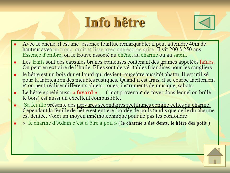 Info hêtre