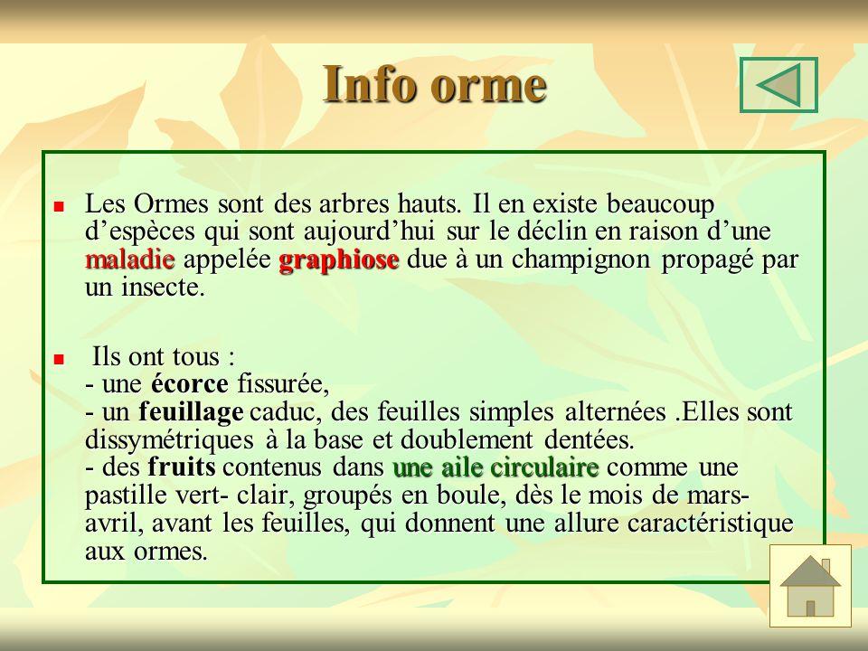 Info orme