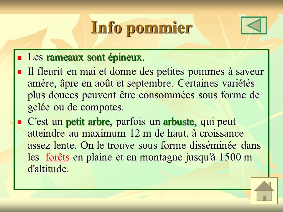 Info pommier Les rameaux sont épineux.