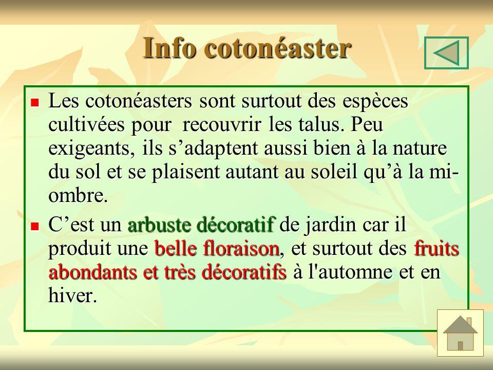 Info cotonéaster
