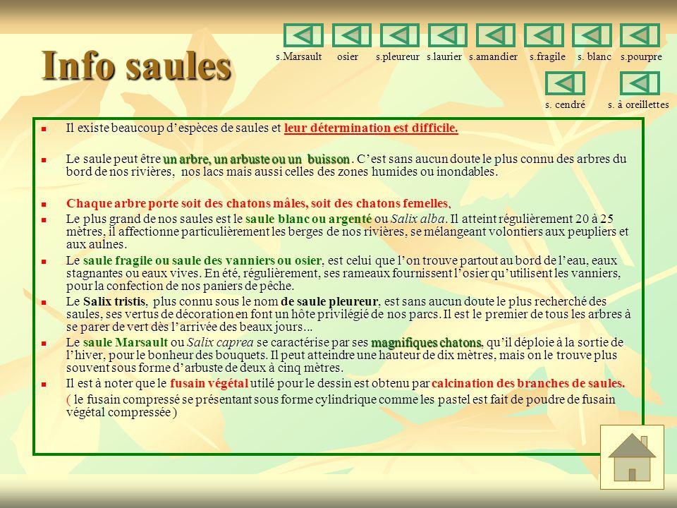 Info saules s.Marsault osier s.pleureur s.laurier s.amandier s.fragile s. blanc s.pourpre.