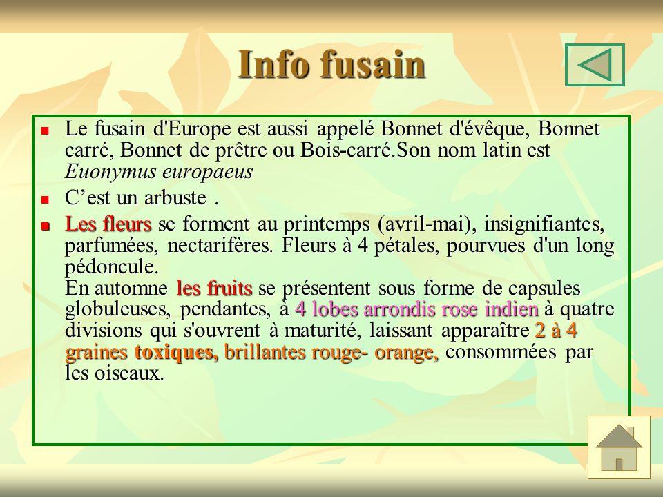 Info fusain Le fusain d Europe est aussi appelé Bonnet d évêque, Bonnet carré, Bonnet de prêtre ou Bois-carré.Son nom latin est Euonymus europaeus.