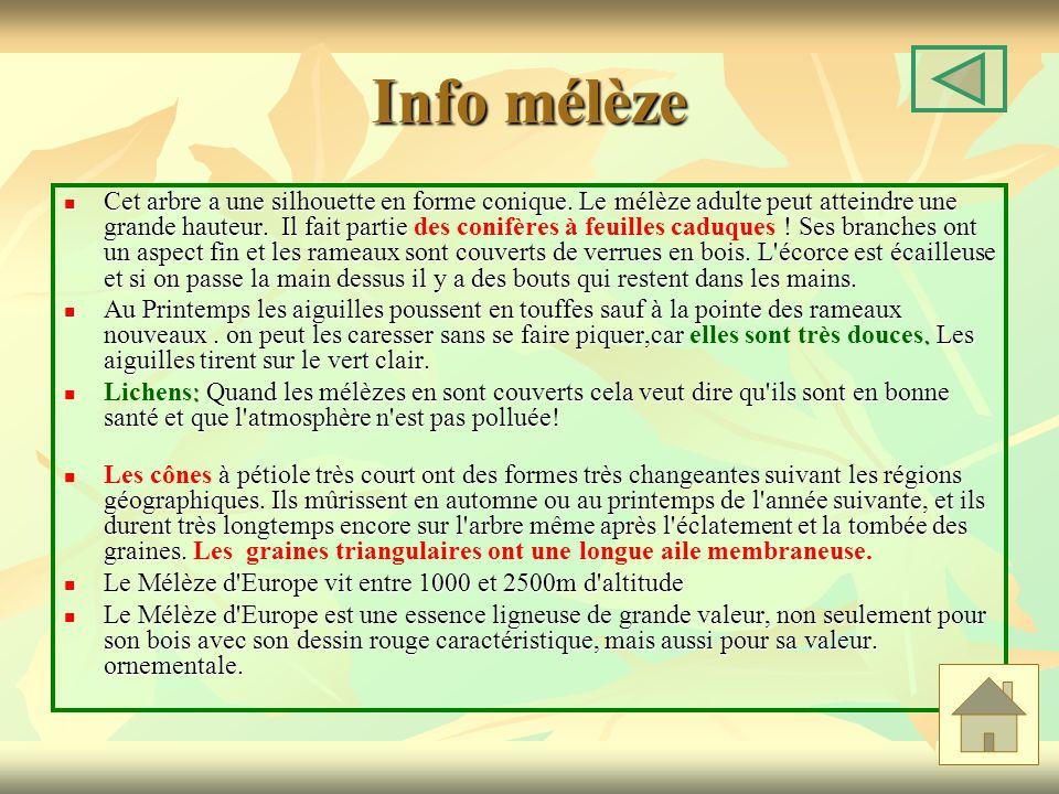 Info mélèze