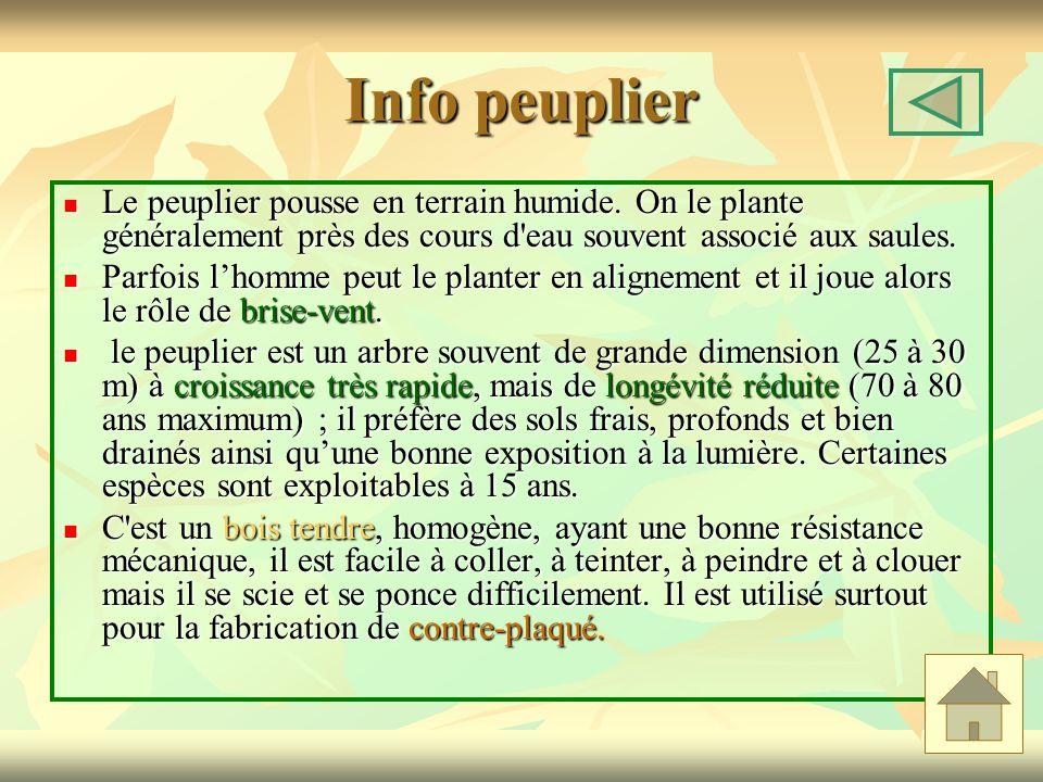 Info peuplier Le peuplier pousse en terrain humide. On le plante généralement près des cours d eau souvent associé aux saules.