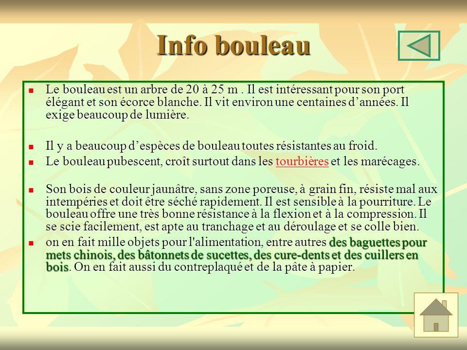 Info bouleau