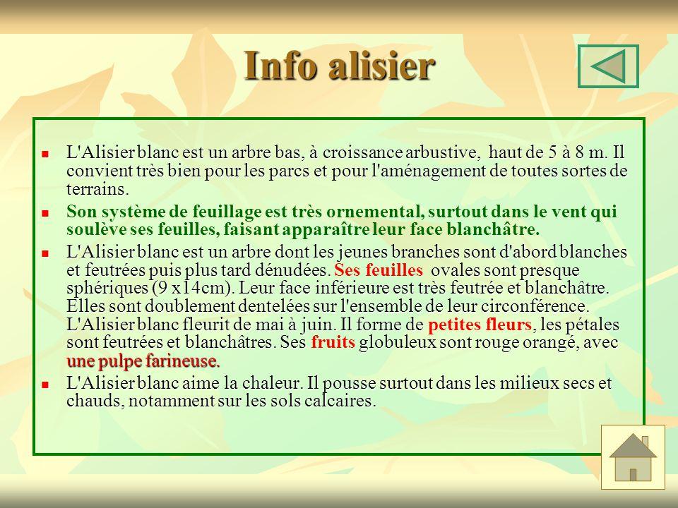 Info alisier