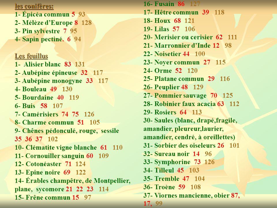 16- Fusain 86 127 17- Hêtre commun 39 118. 18- Houx 68 121. 19- Lilas 57 106. 20- Merisier ou cerisier 62 111.