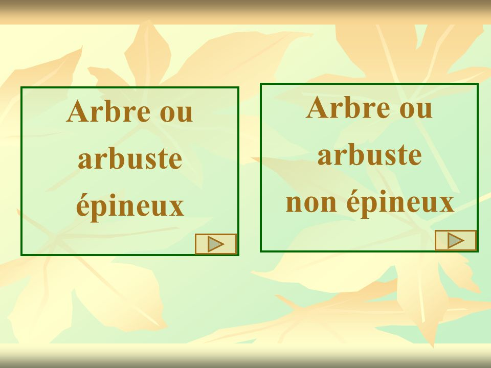 Arbre ou arbuste non épineux Arbre ou arbuste épineux