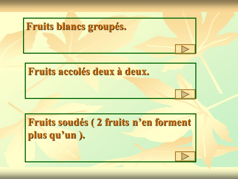 Fruits blancs groupés. Fruits accolés deux à deux.
