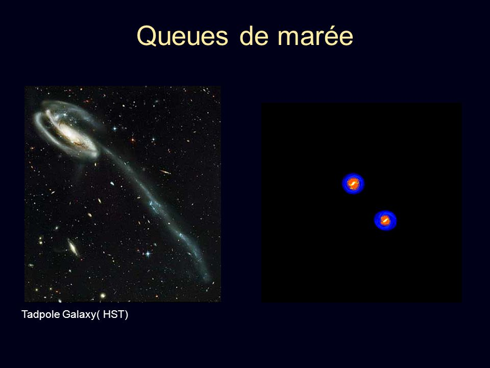 Queues de marée Tadpole Galaxy( HST)