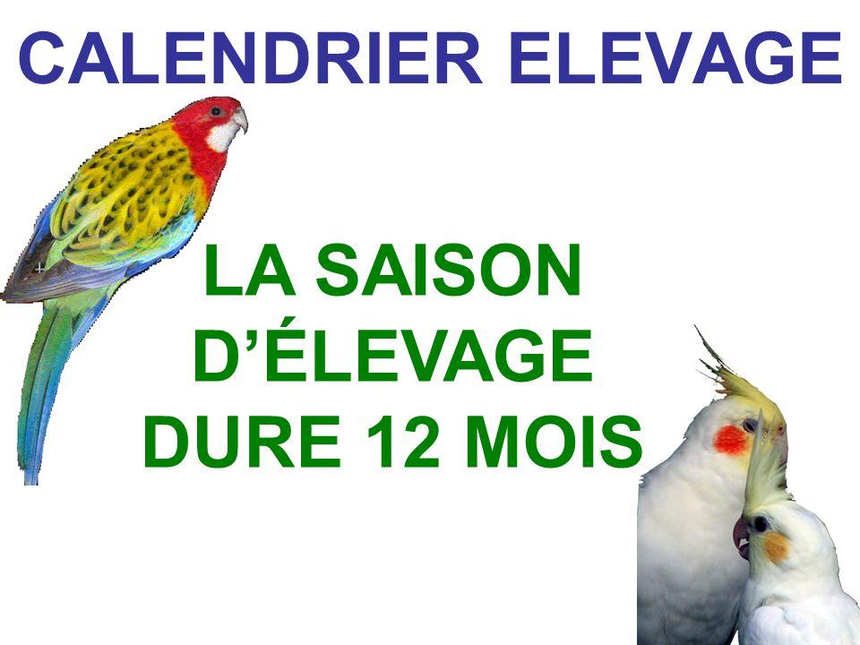 LA SAISON D'ÉLEVAGE DURE 12 MOIS