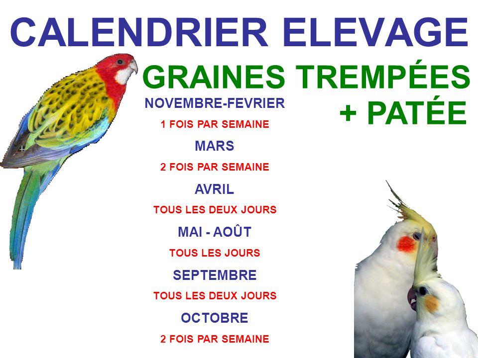 CALENDRIER ELEVAGE GRAINES TREMPÉES + PATÉE NOVEMBRE-FEVRIER MARS