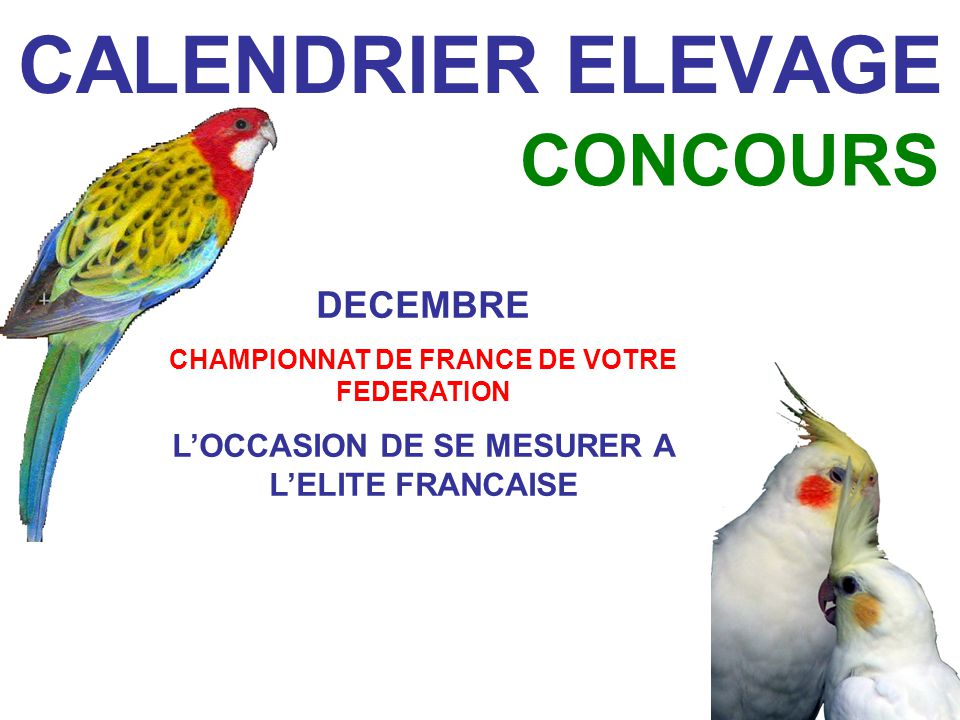 CALENDRIER ELEVAGE CONCOURS DECEMBRE