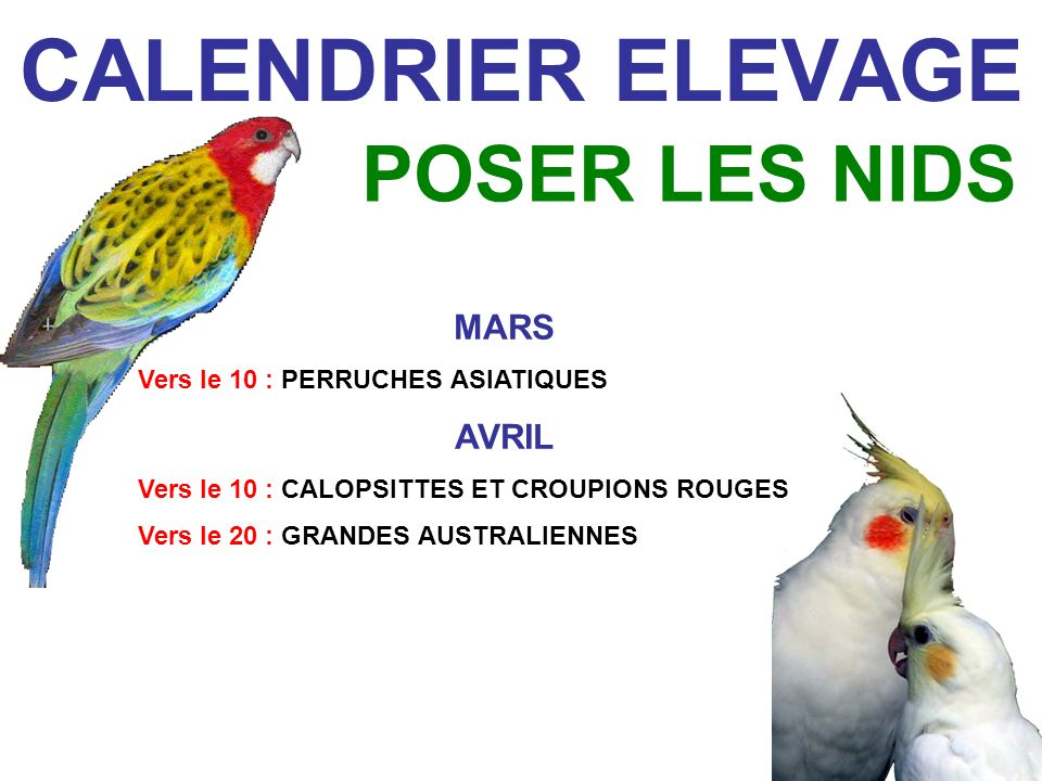 CALENDRIER ELEVAGE POSER LES NIDS MARS AVRIL