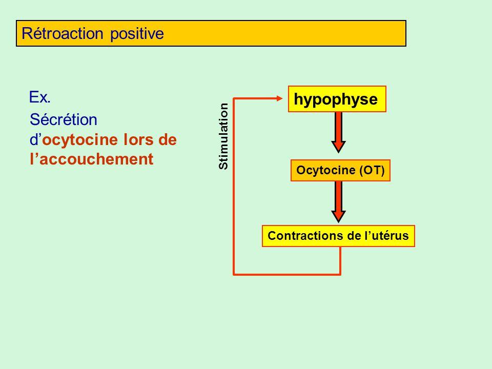 Sécrétion d'ocytocine lors de l'accouchement